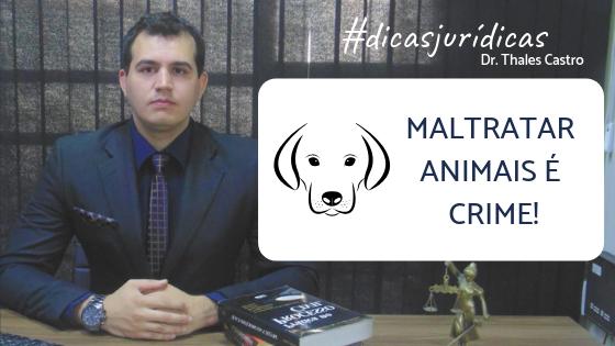 MALTRATAR ANIMAIS É CRIME! Leia em Dicas Jurídicas, hoje com o Advogado Thales Castro