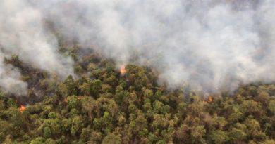 Incêndio atinge o Parque Estadual do Rio Doce. A situação está sem controle. Linha de fogo atinge 3 km