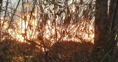 Incêndios florestais podem atingir o Parque do Rio Doce