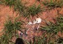 Esqueleto humano é encontrado por moradores no Bairro Novo Tempo