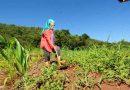 Edital para instituições interessadas em dar assistência a produtores rurais é reaberto