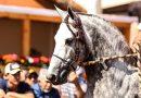 A 39ª Exposição Nacional do Cavalo Mangalarga Marchador é adiada